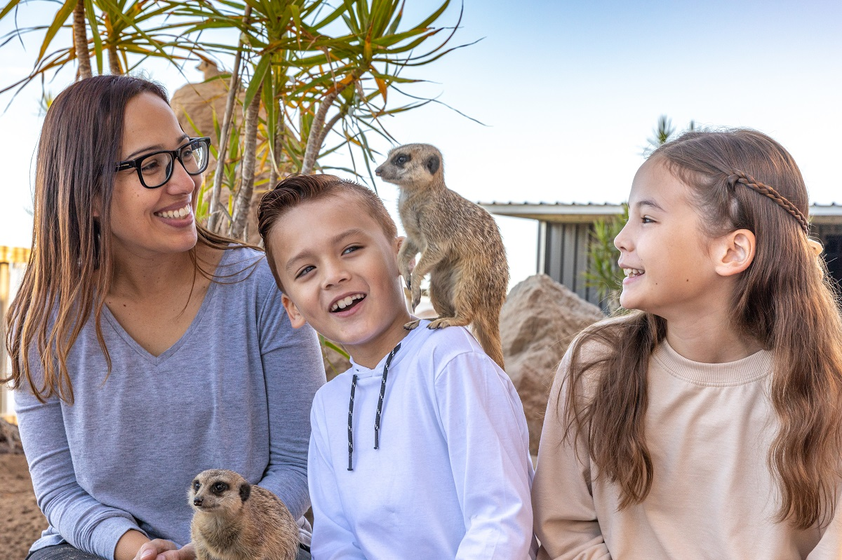 family with meerkat
