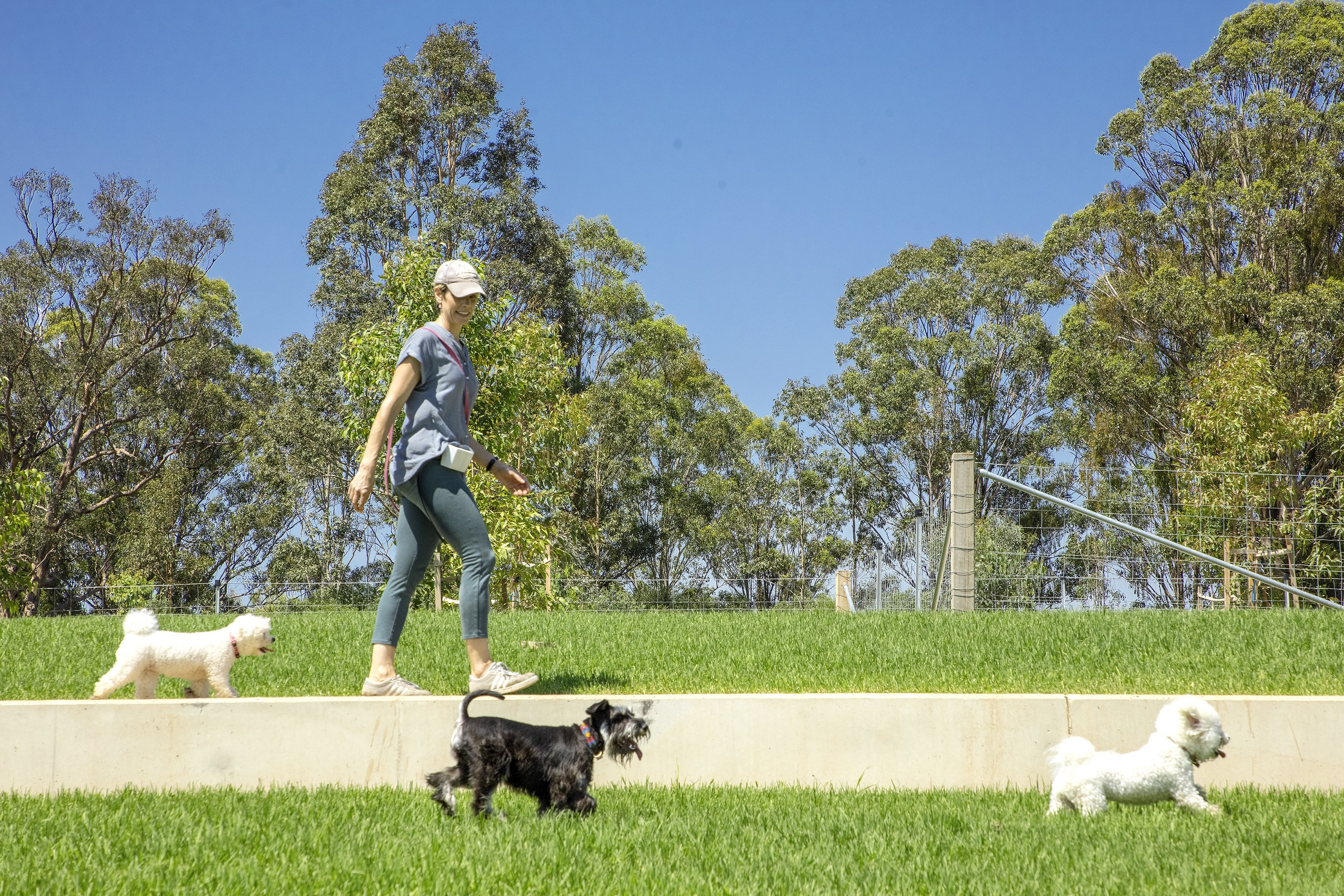 Dogs enjoying Western Sydney Parklands new dog park