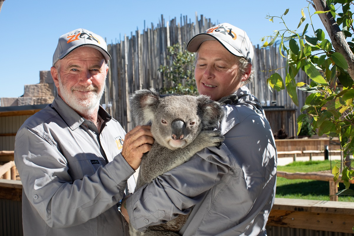 Zoo keepers with a koala